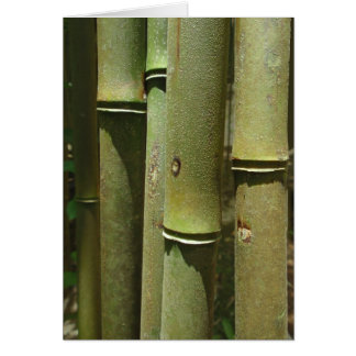 Detalle del bambú de la selva tarjetas