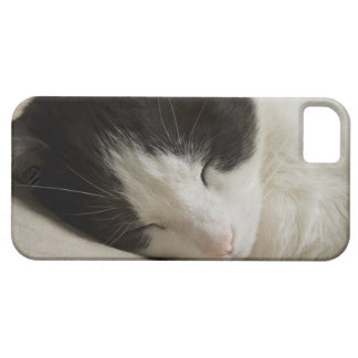 Detalle del retrato de dormir del gato nacional funda para iPhone 5 barely there