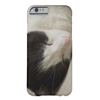 Detalle del retrato de dormir del gato nacional funda para iPhone 6 barely there