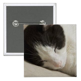Detalle del retrato de dormir del gato nacional pins