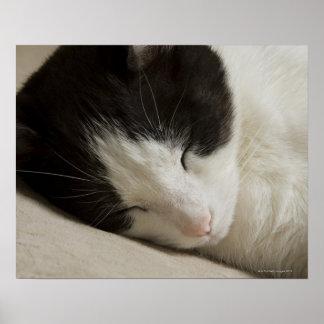 Detalle del retrato de dormir del gato nacional póster