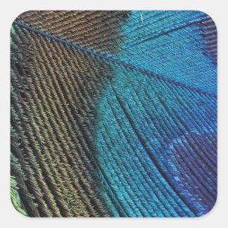 Detalle masculino de la pluma del pavo real colcomanias cuadradas personalizadas