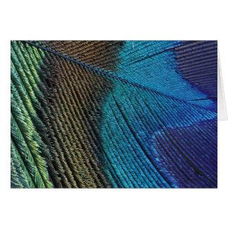 Detalle masculino de la pluma del pavo real tarjeta de felicitación