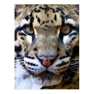 Detalle nublado del leopardo tarjetas postales