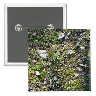 Detalle plantas de las pequeñas de un liquen en un pin