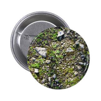 Detalle plantas de las pequeñas de un liquen en un pins