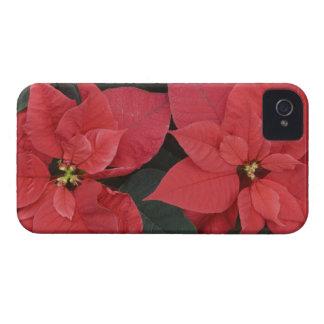 Detalle rojo del Poinsettia (pulcherrima del eufor Case-Mate iPhone 4 Protector