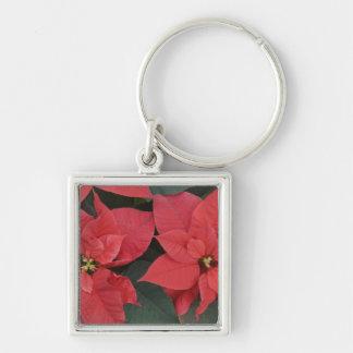 Detalle rojo del Poinsettia (pulcherrima del eufor Llavero Cuadrado Plateado