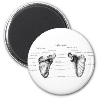 Detalles del omóplato imán redondo 5 cm