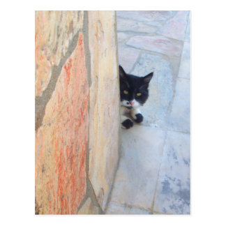 DETECTIVE CAT BEHIND THE STONE WALL / Father's Day Postcard