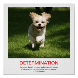 DETERMINATION demotivational poster