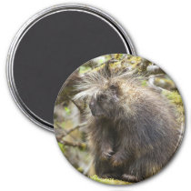 Determined Porcupine Magnet