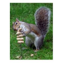 Determined Squirrel Postcard