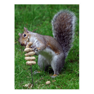 Determined Squirrel Postcard