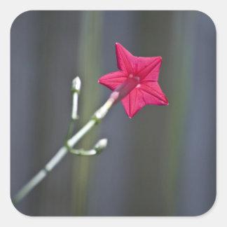 Detrás de la flor pegatina cuadrada