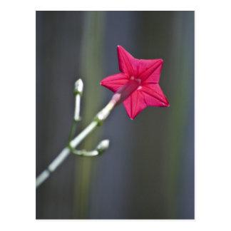 Detrás de la flor tarjeta postal