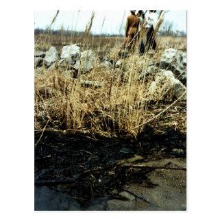 Detroit River Oil Spill Damage Post Cards
