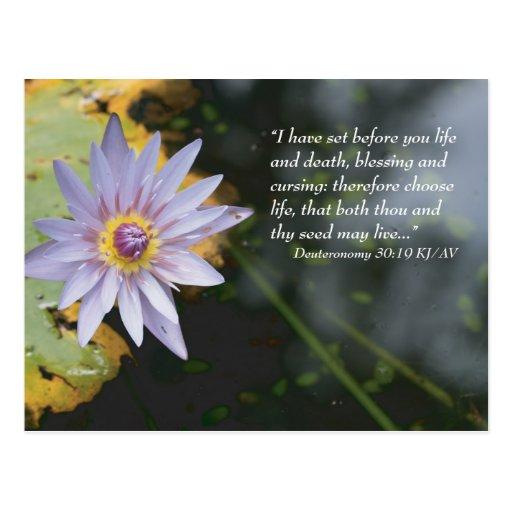 Deuteronomy 30:19 Scripture Postcard