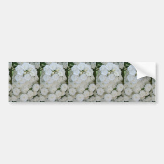Deutzia Pure and Simple Bumper Sticker