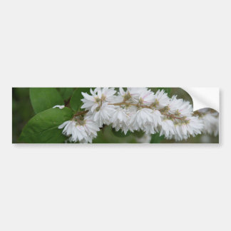 Deutzia Scabra Bumper Sticker