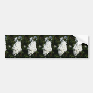Deutzia White Spring Blossoms Bumper Sticker