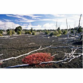 Devastation Area - Kiluaea Crater, Hawaii Cut Out