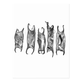 devil purses by stanthos postcard