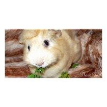 Devilishly Cute Cream Colored Guinea Pig Card