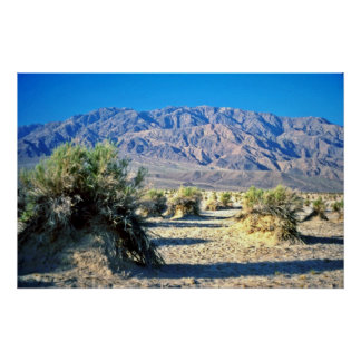 Devil's Cornfield And Panamint Mountains Posters
