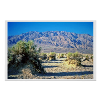 Devil's Cornfield And Panamint Mountains Poster