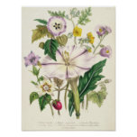 Devil's Trumpet, plate 46 from 'The Ladies' Poster