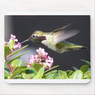 Devoluciones del colibrí alfombrillas de ratones