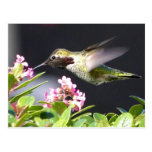 Devoluciones del colibrí tarjeta postal