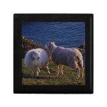 Devon del sur dos ovejas en la costa costa alejada caja de joyas