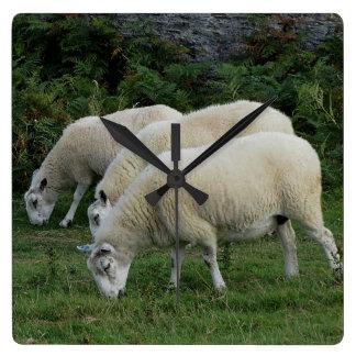 Devon del sur tres ovejas Grazeing en línea Reloj Cuadrado
