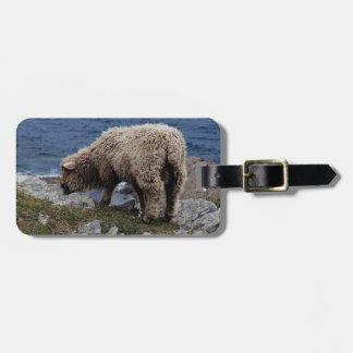 Devon Long Wool Sheep Lamb Grazing On Coastline Luggage Tags