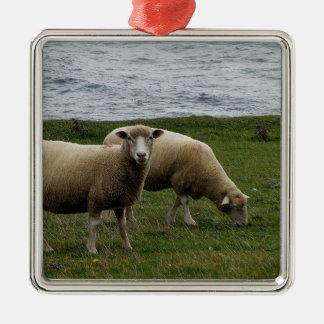 Devon long wool sheep on remote south Devon coast Square Metal Christmas Ornament
