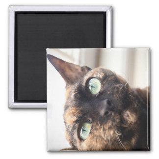 Devon Rex Cat Magnet