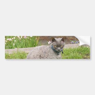 Devon Rex pet cat in garden Bumper Sticker