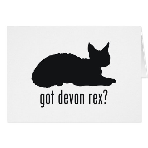 Devonshire Rex Cat Card