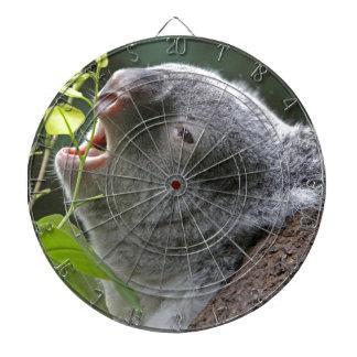 Devorando koala