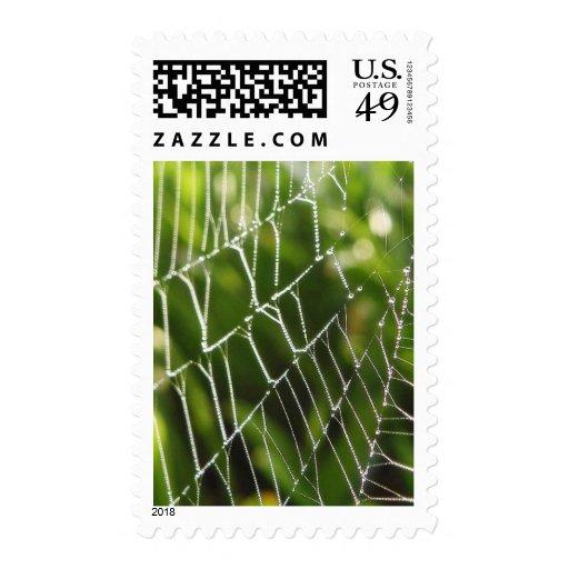 Dew And Spiderwebs Postage Stamps