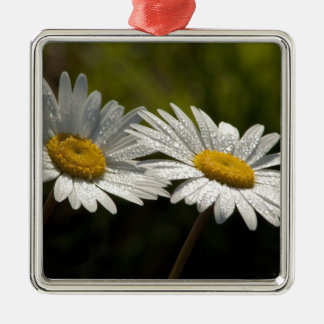 Dew Bejeweled Ox-eye Daisy Wildflowers Metal Ornament