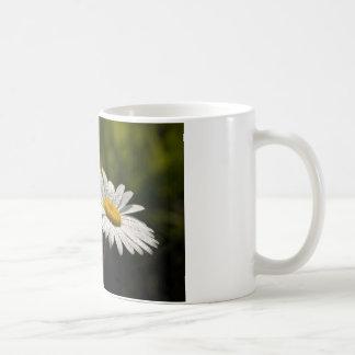 Dew Bejeweled Ox-eye Daisy Wildflowers Classic White Coffee Mug