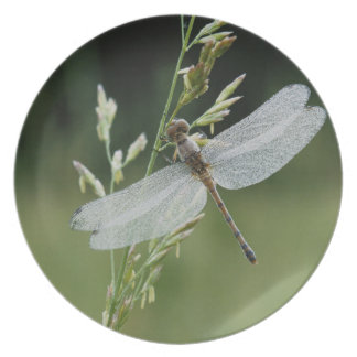 Dew covered Darner Dragonfly Dinner Plate