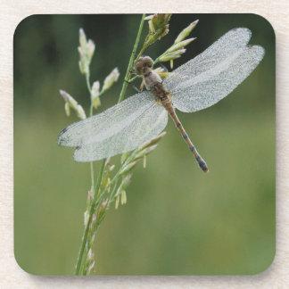 Dew covered Darner Dragonfly Drink Coaster