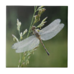 Dew covered Darner Dragonfly Small Square Tile