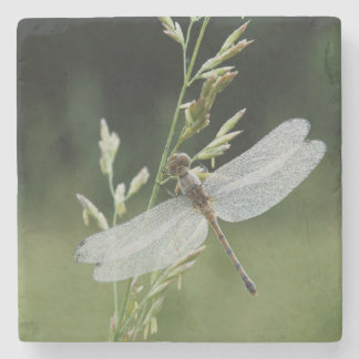 Dew covered Darner Dragonfly Stone Coaster