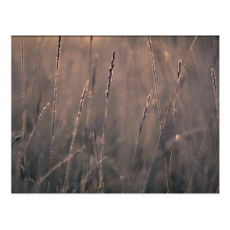 Dew-covered grass at dawn postcard