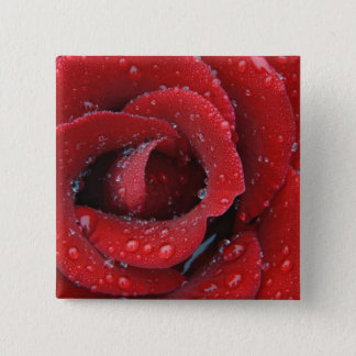 Dew covered red rose decorating grave site in button